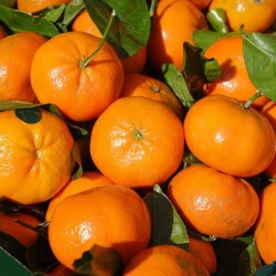 Clementine senza semi -...