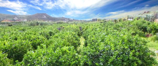 Azienda Agricola Tornambè | Arance di RIbera e Agrimii Siciliani